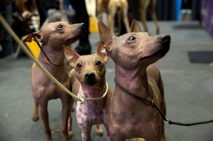 terriers.jpg